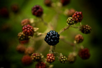 Berry in focus